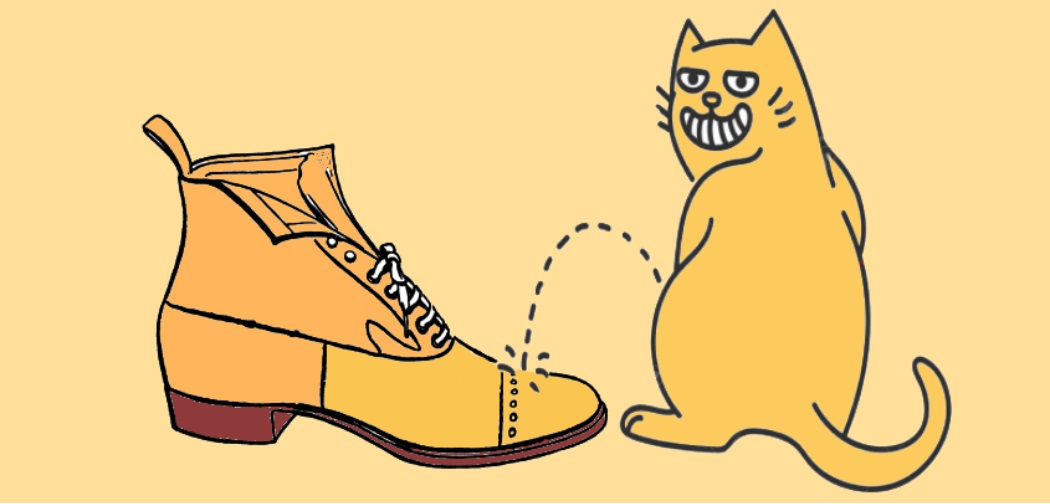 How to Get Cat Pee Out of Shoes